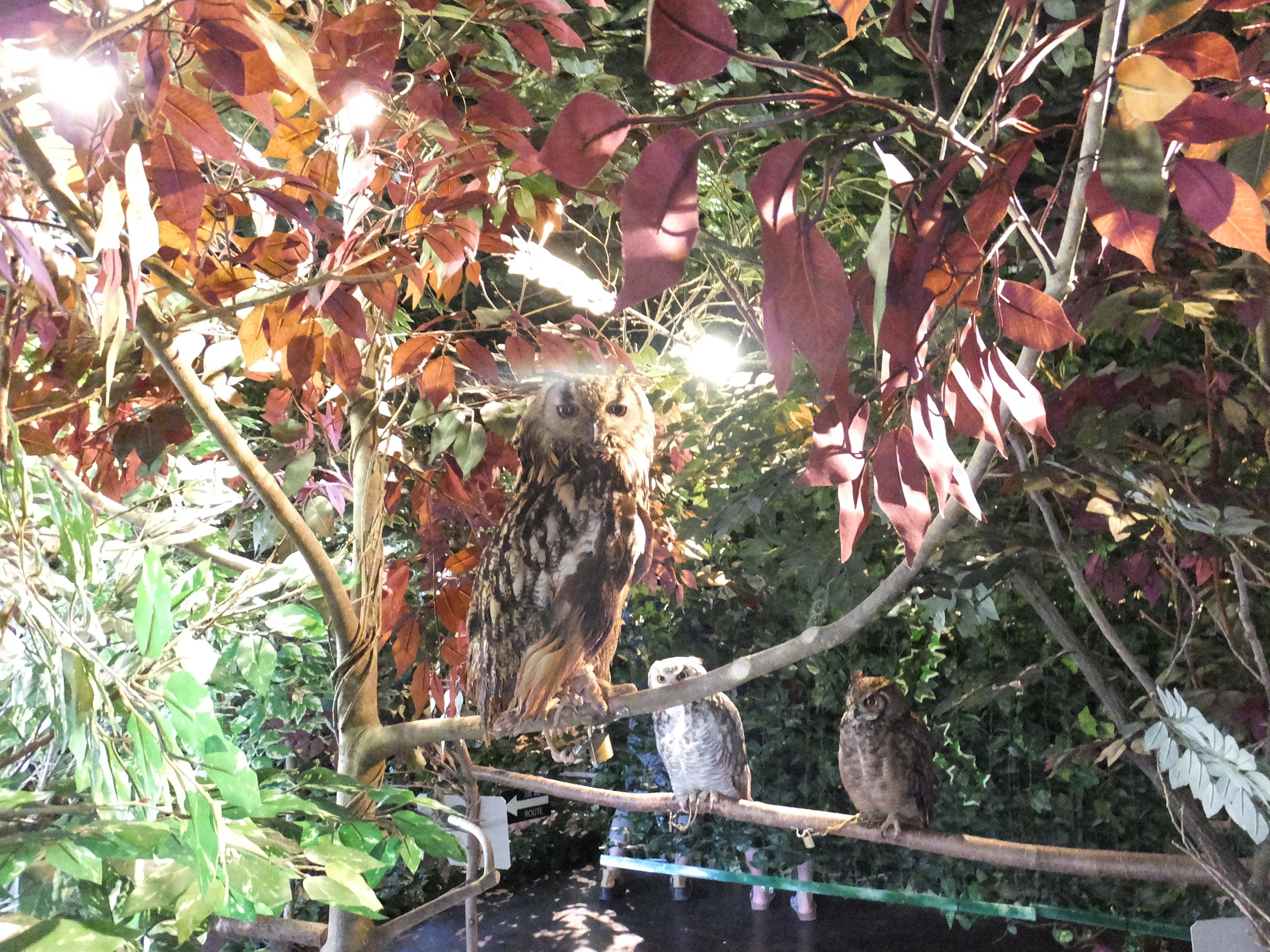 フクロウの森宮島2