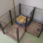 子犬のサークルを買いました!おすすめ、配置、値段など|子犬を迎える6日前